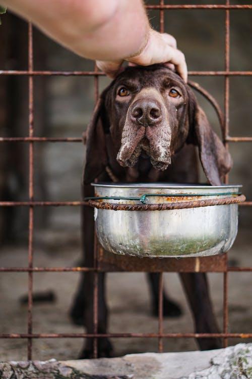 Październik jest miesiącem dobroci dla zwierząt